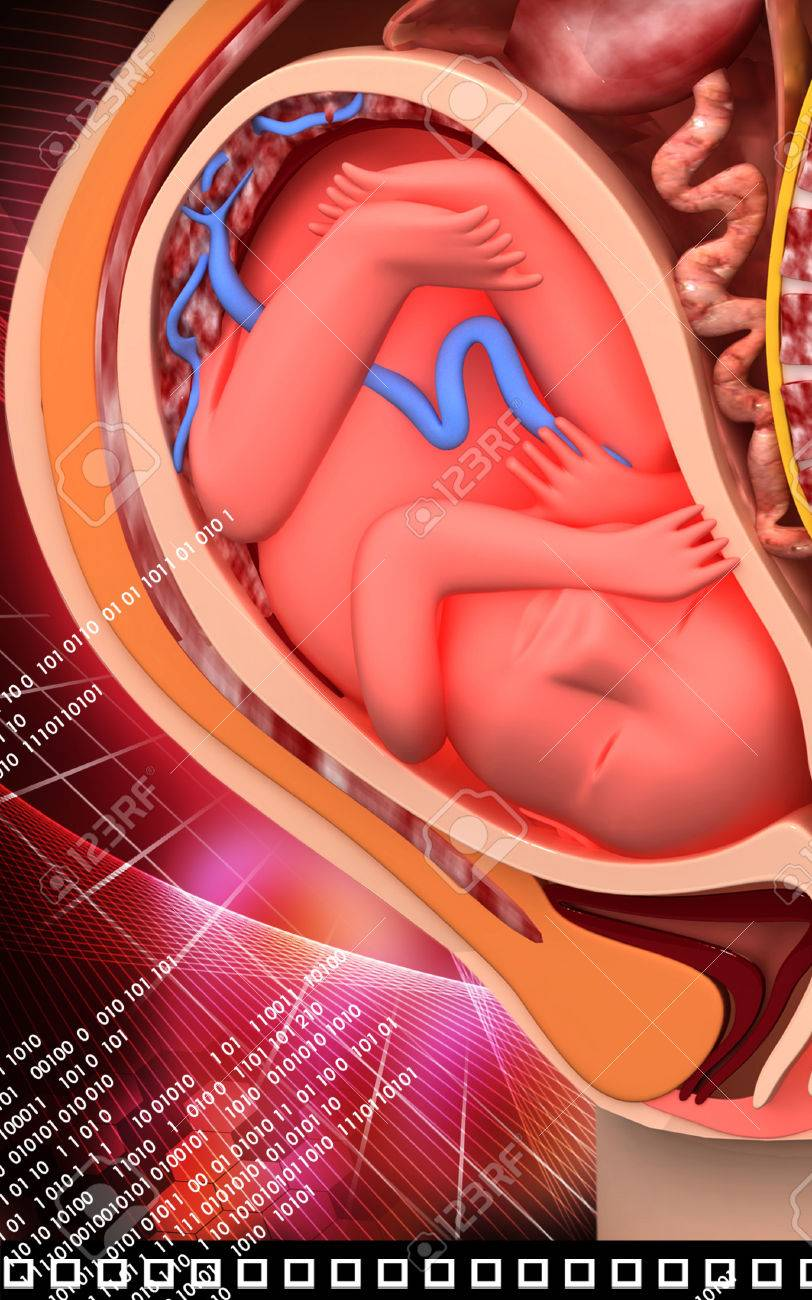 Digitale Abbildung Der Anatomie Schwangere Mit Fötus In Farbe ...