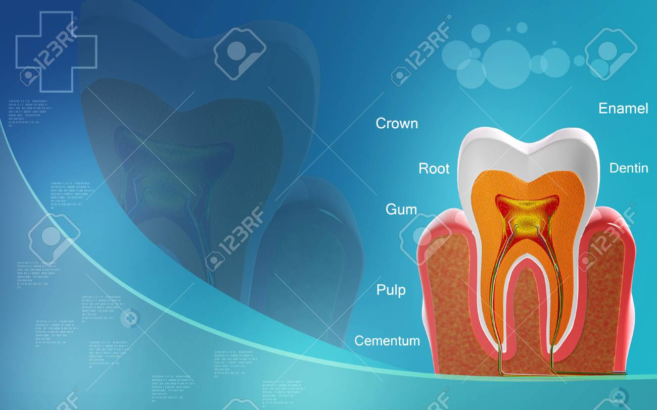 Digital illustration of teeth cross section in colour background - 52107564