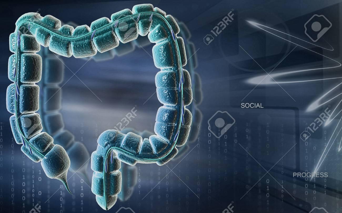 Digital illustration of large intestine in colour background - 52506601