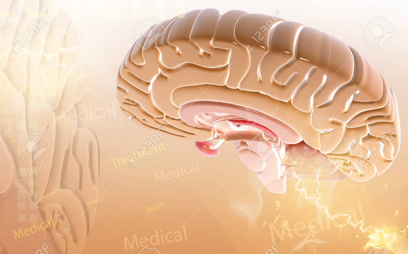 Digital illustration of brain in colour background - 52796559