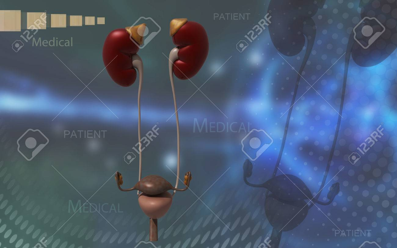 Digital illustration of Kidneys and urinary bladder in colour background - 53745862