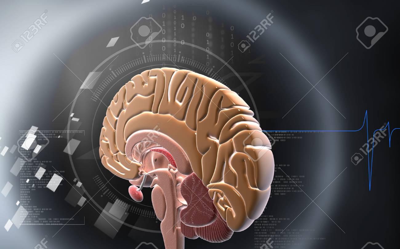 Digital illustration of brain in colour background - 59996500