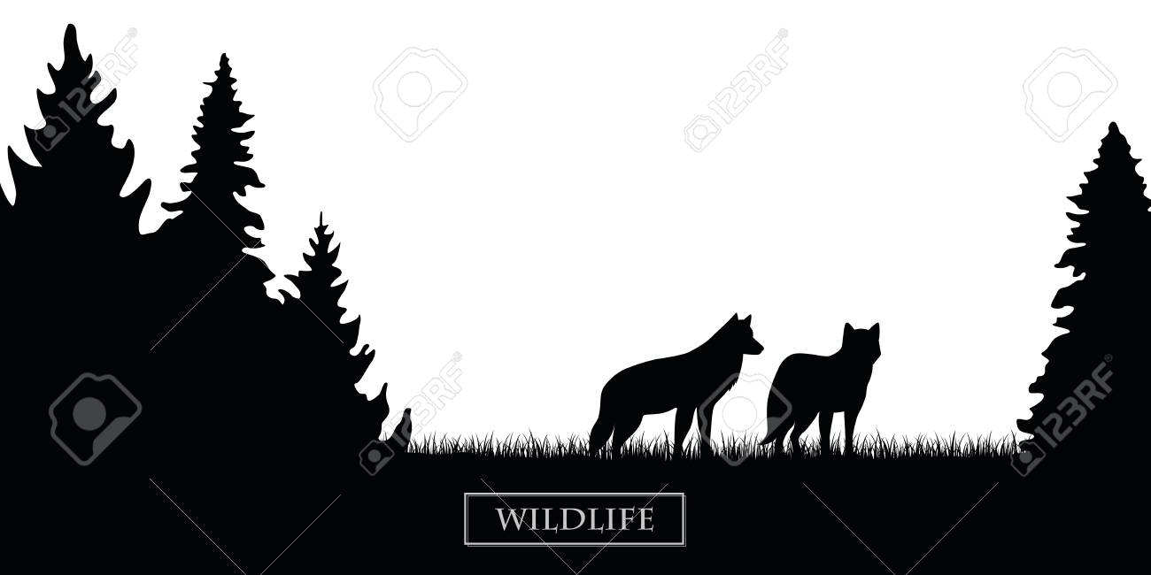two wildlife wolves silhouette in the forest on the meadow black and white vector illustration EPS10 - 122551528