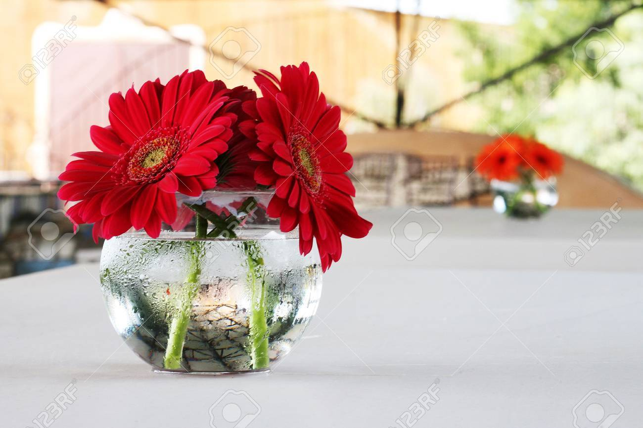 Red and orange gerber daisies in round vases decorate the table red and orange gerber daisies in round vases decorate the table at a wedding reception stock junglespirit Choice Image
