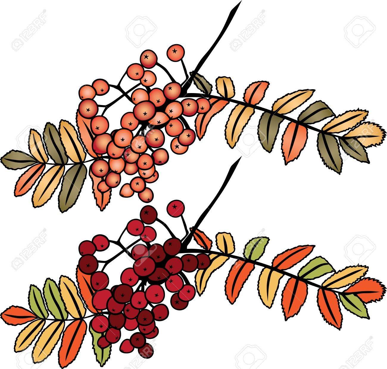 Autumn rowan berry branch in two variants Stock Vector - 15611742