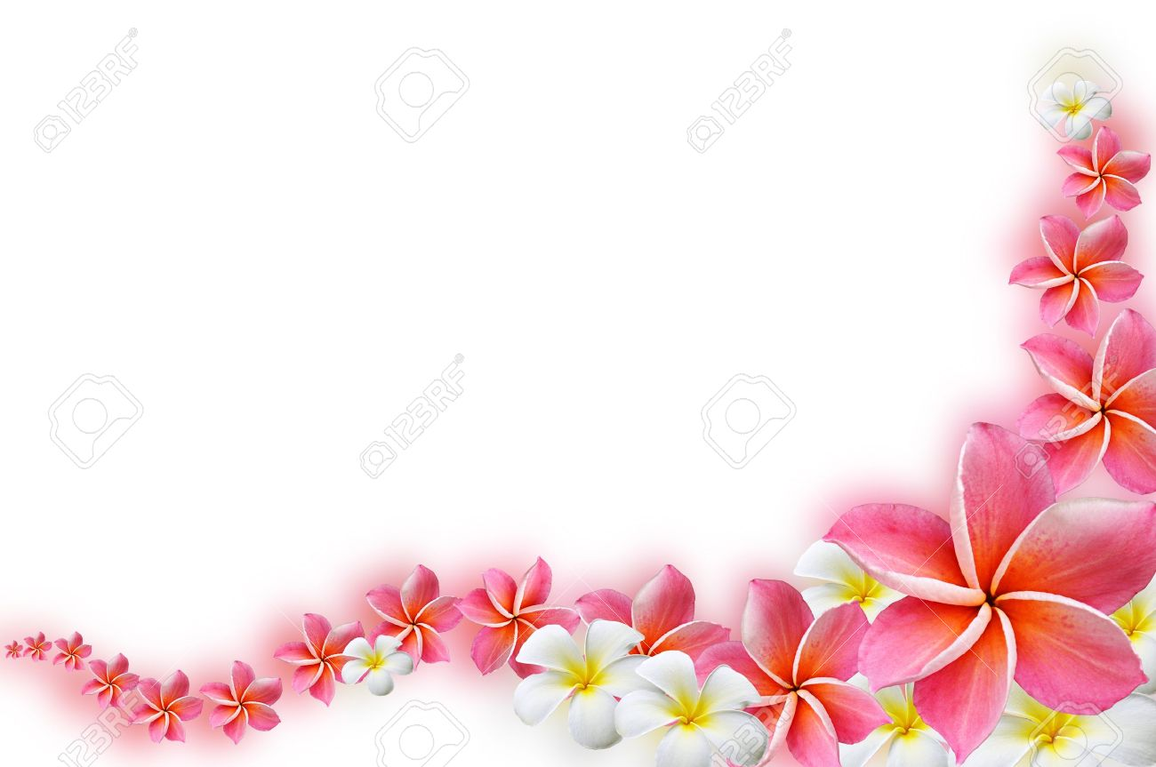 Beautiful frangipani flowers border design stock photo picture beautiful frangipani flowers border design stock photo 15032504 izmirmasajfo