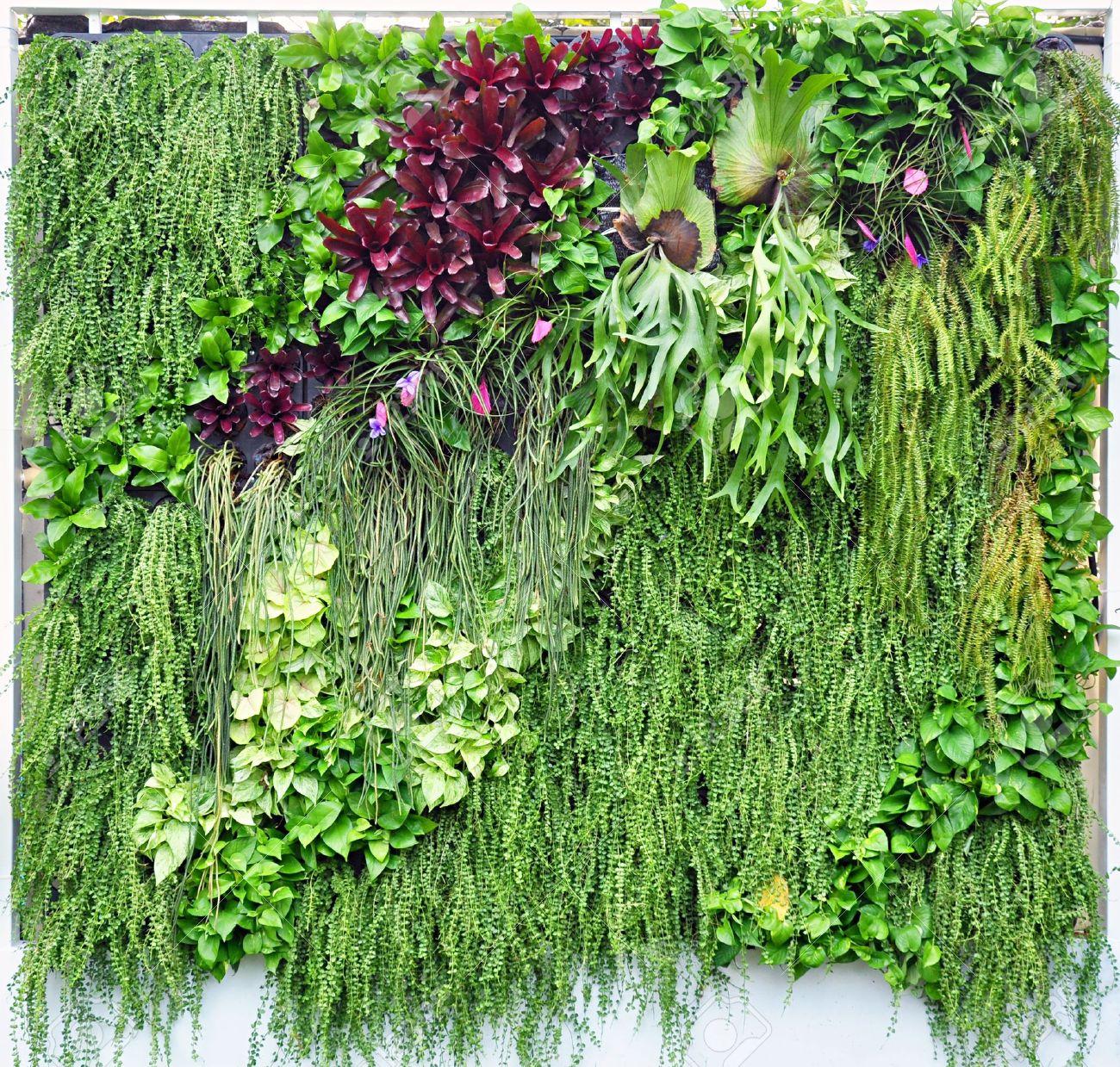 tropische pflanzen in vertikaler garten lizenzfreie fotos, bilder