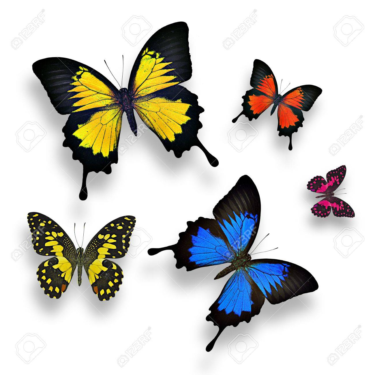 Collection Of Colorful Butterflies On White Background Stock Photo ...