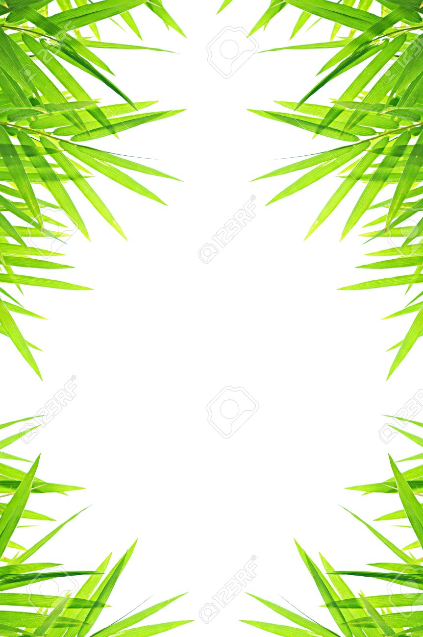 green bamboo leafs border design stock photo 18819934