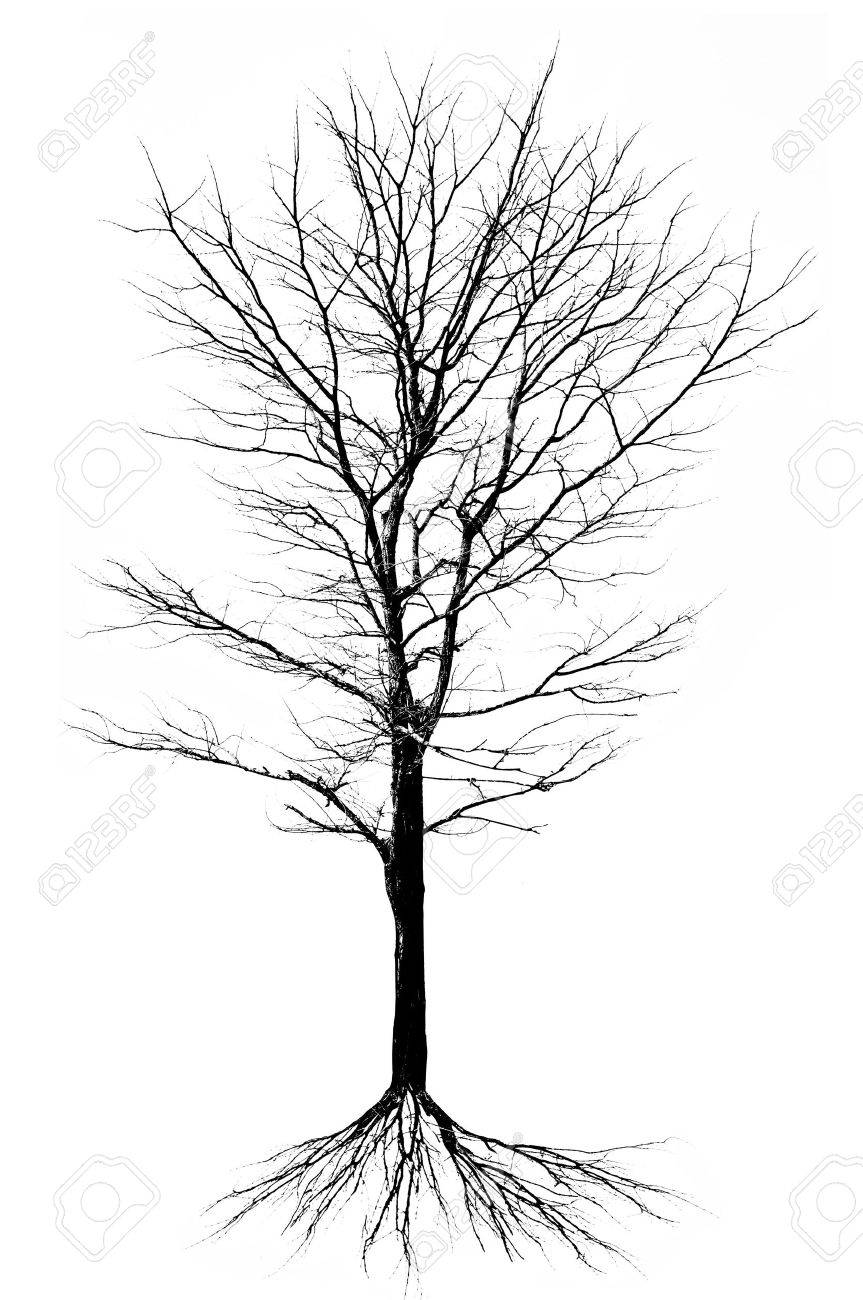 Tree structure - isolated Stock Photo - 18819955