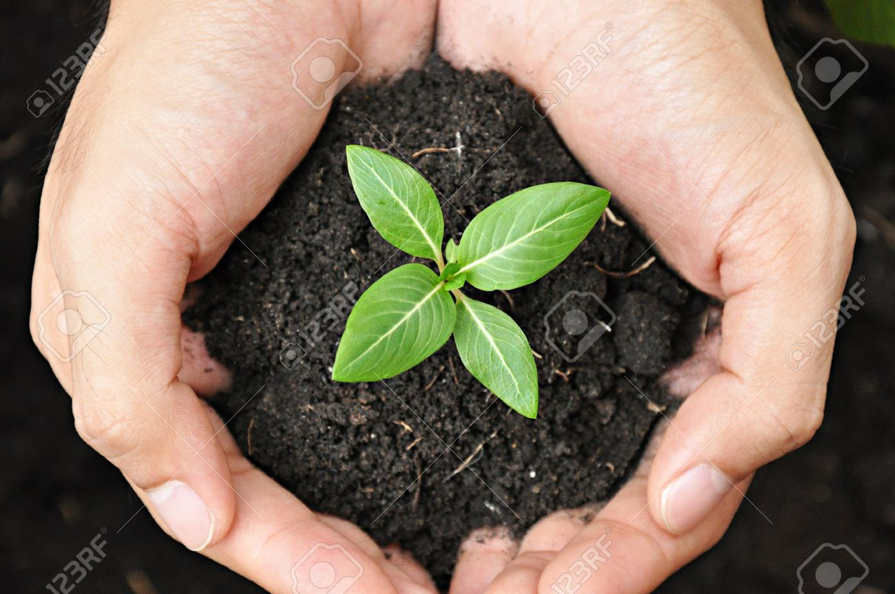 Hands holding young plant with soil Stock Photo - 21014315