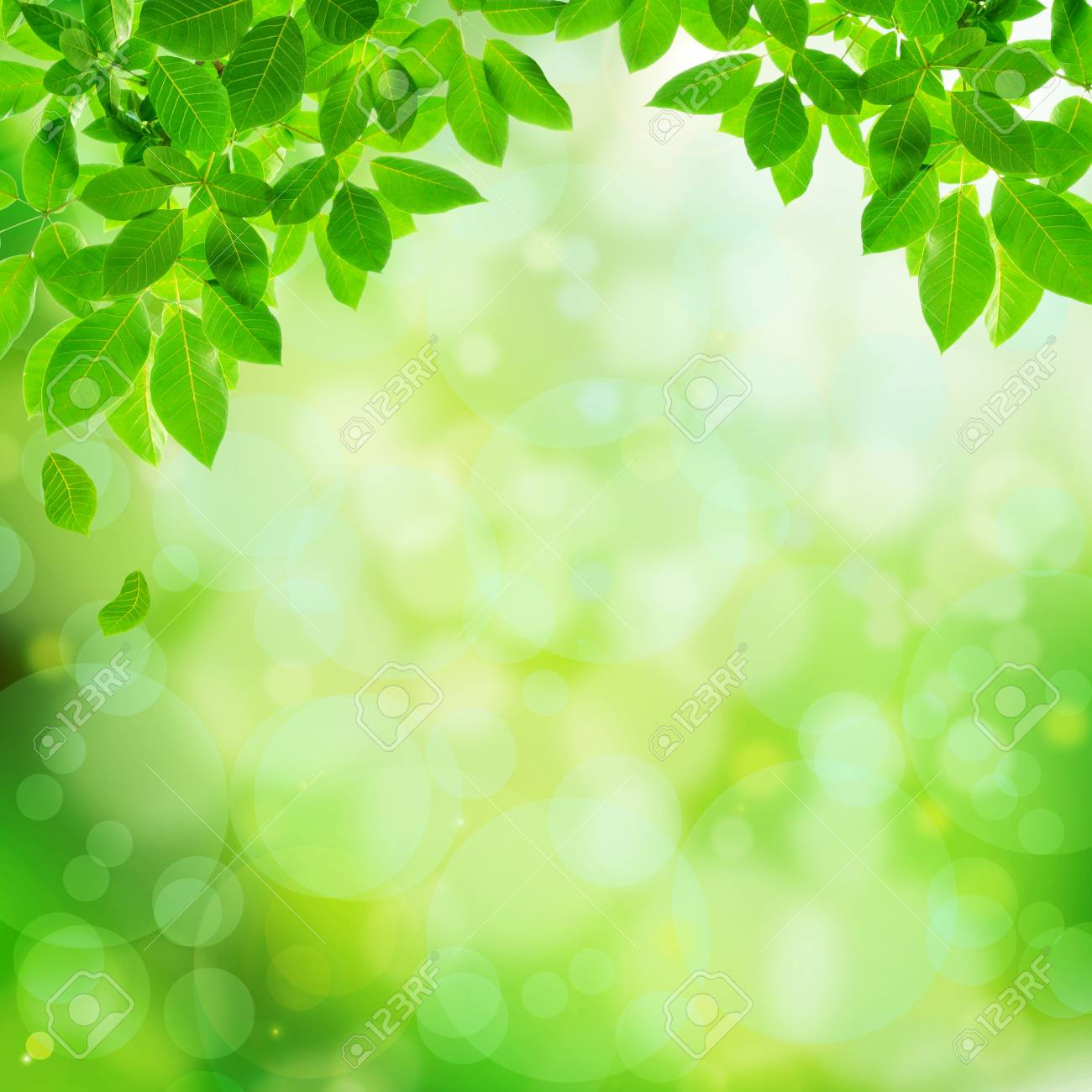 Green Leaves On Bokeh Abstract Background Border Design