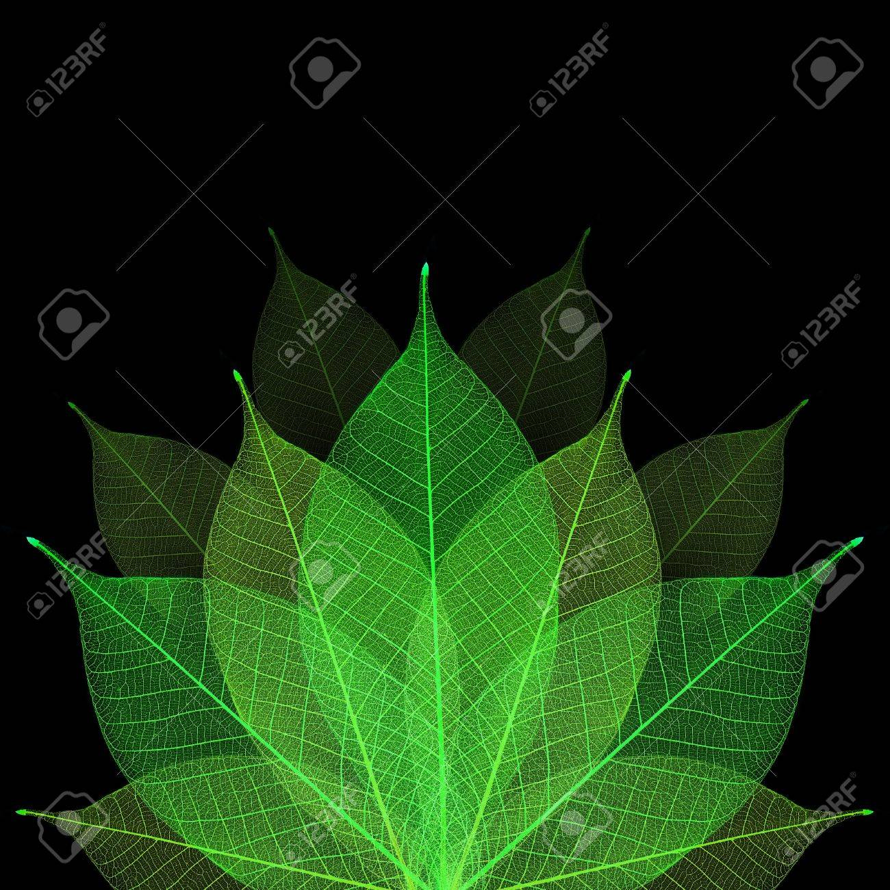 Skeleton leaf abstract background Stock Photo - 14809368