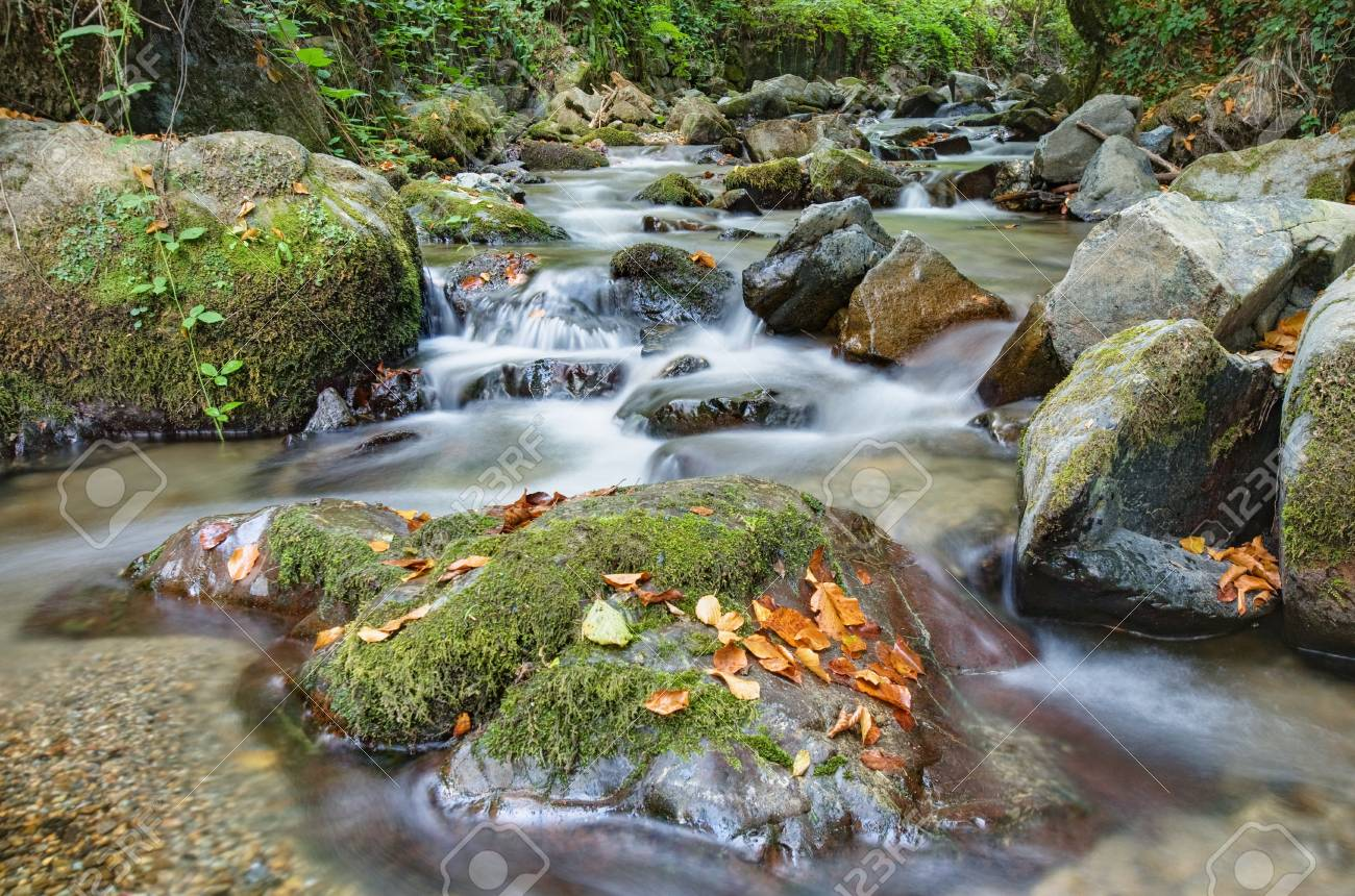 Beautiful mountain stream in forest Stock Photo - 15369418