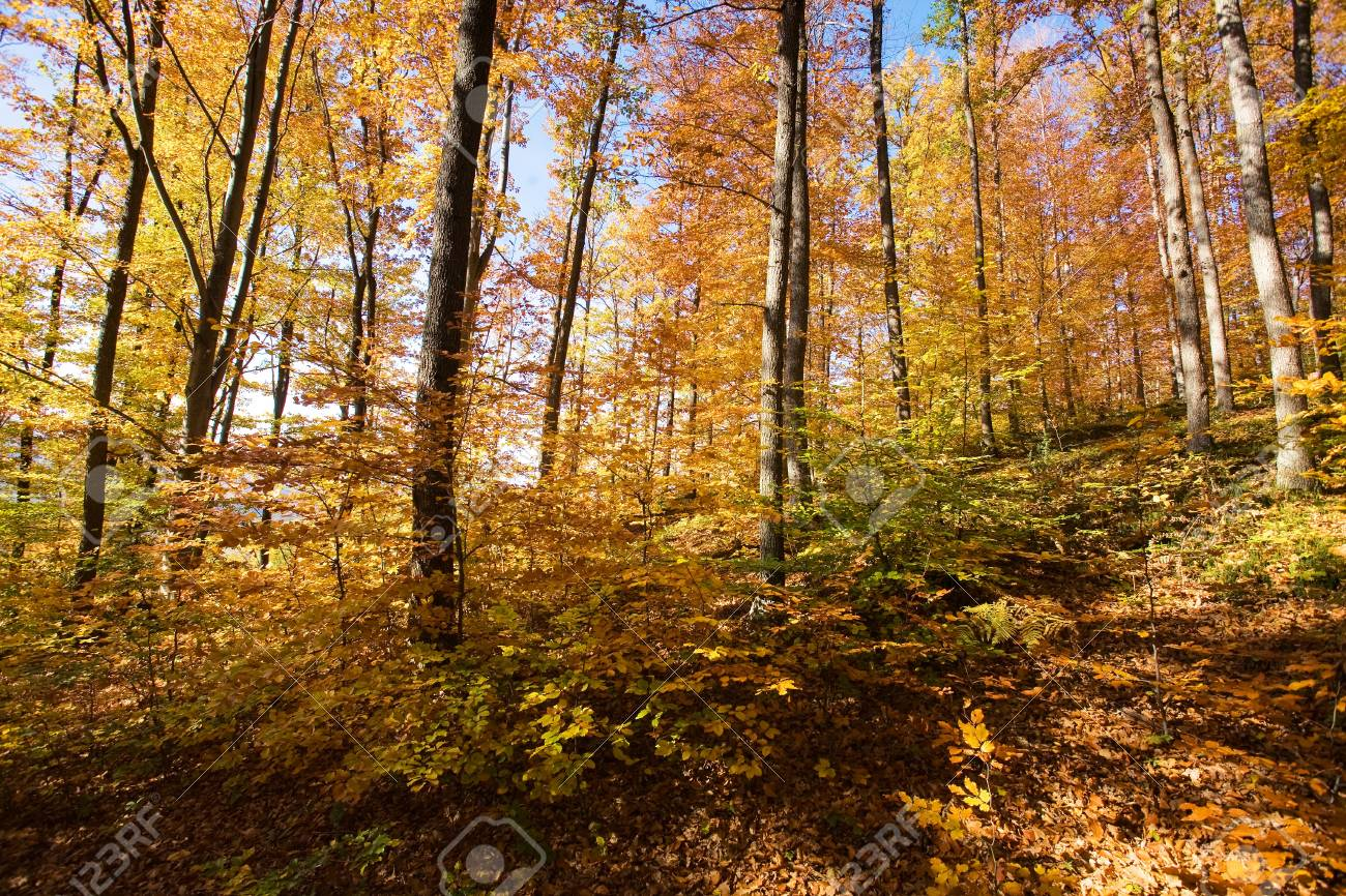 Mountain autumn landscape with colorful forest Stock Photo - 16380691