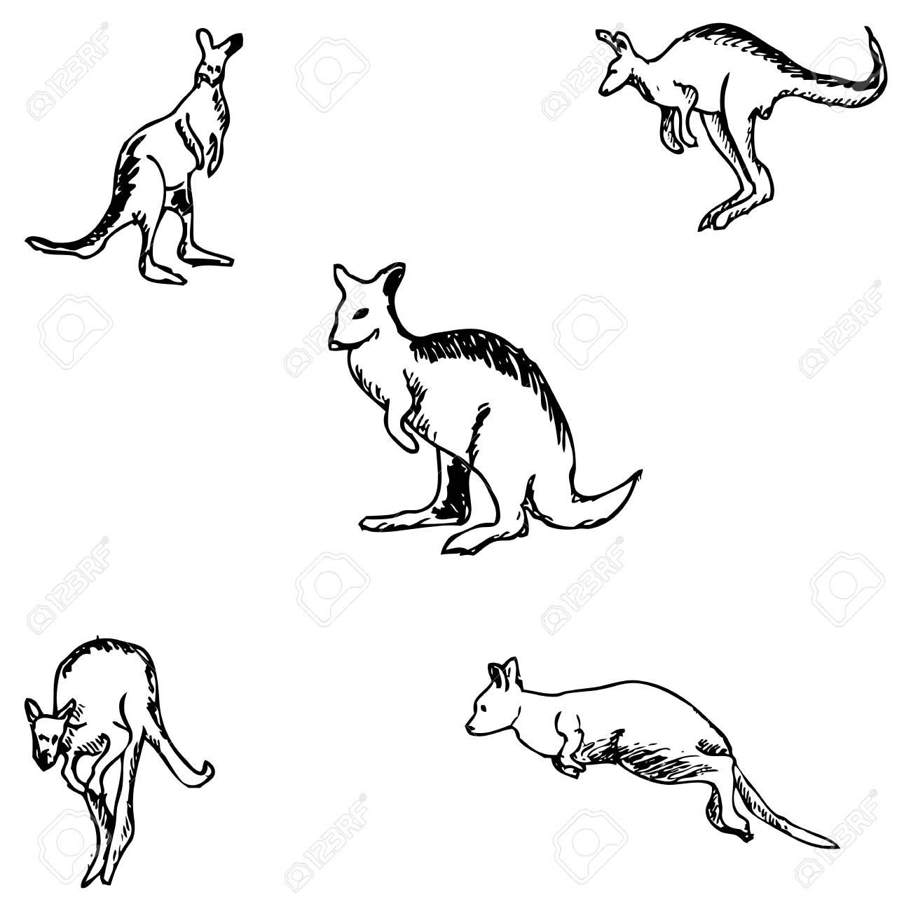 Kangaroo a sketch by hand pencil drawing vector image stock vector 67876107