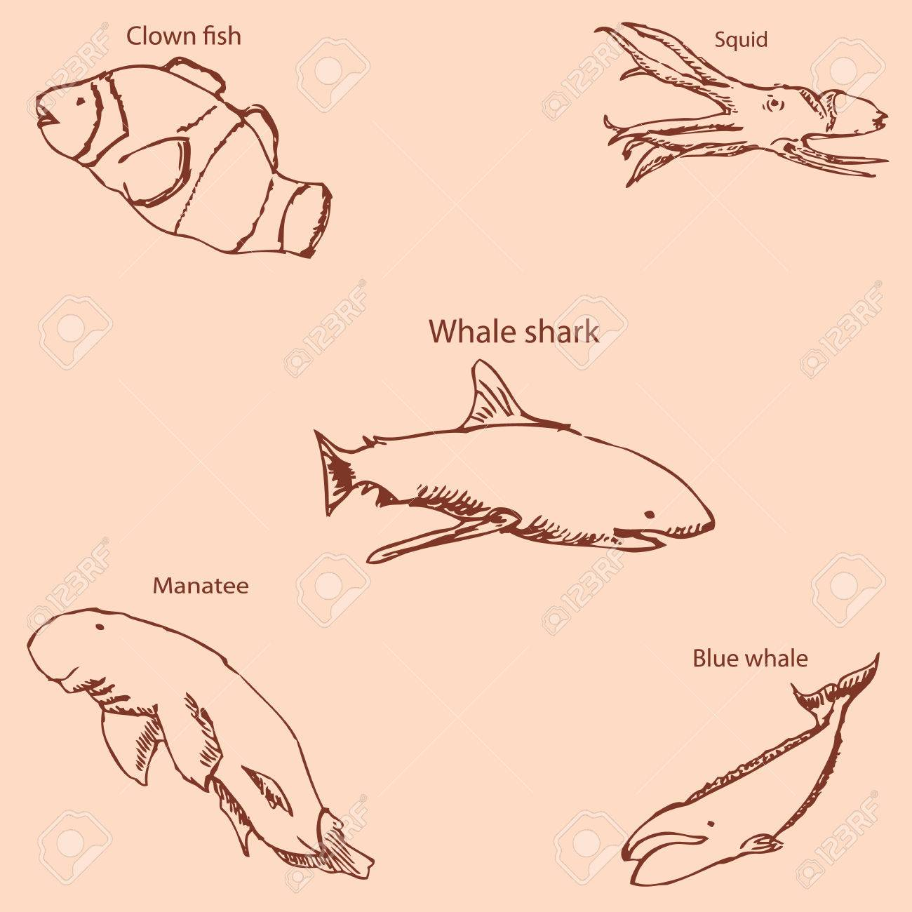 Marine inhabitants with names pencil sketch by hand vintage colors vector image stock