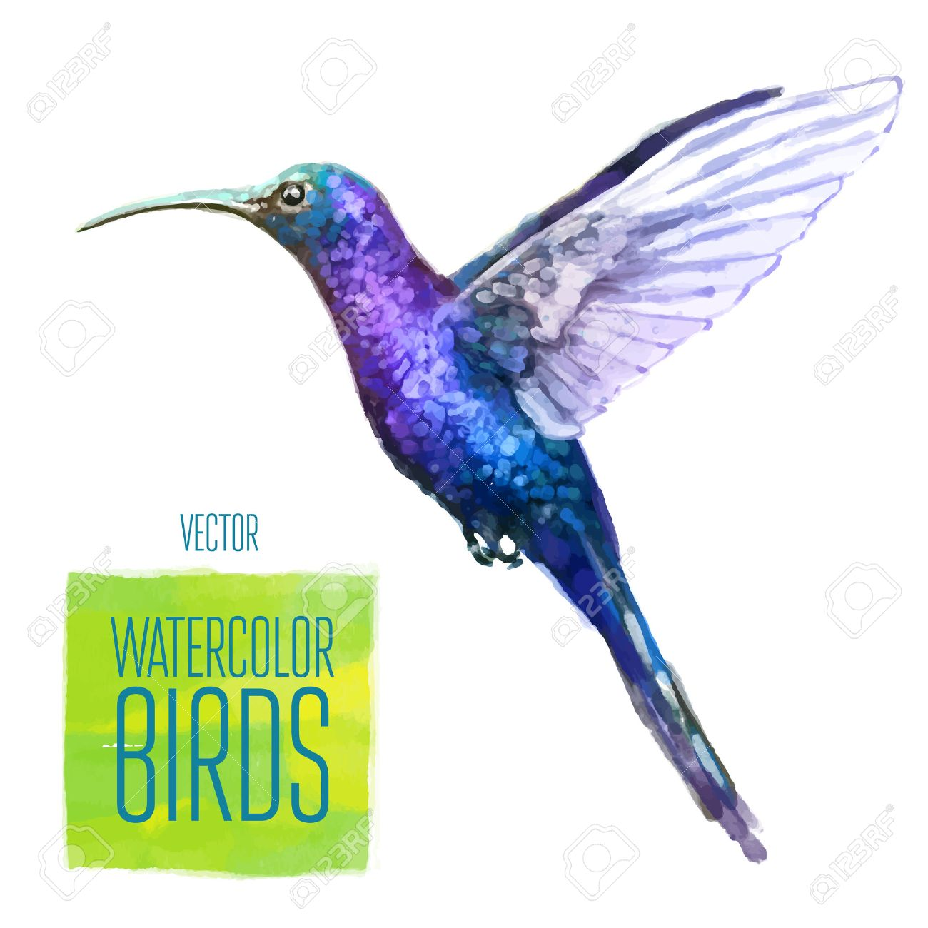 Colibri watercolor bird isolated on white background. Vector illustration - 42774292
