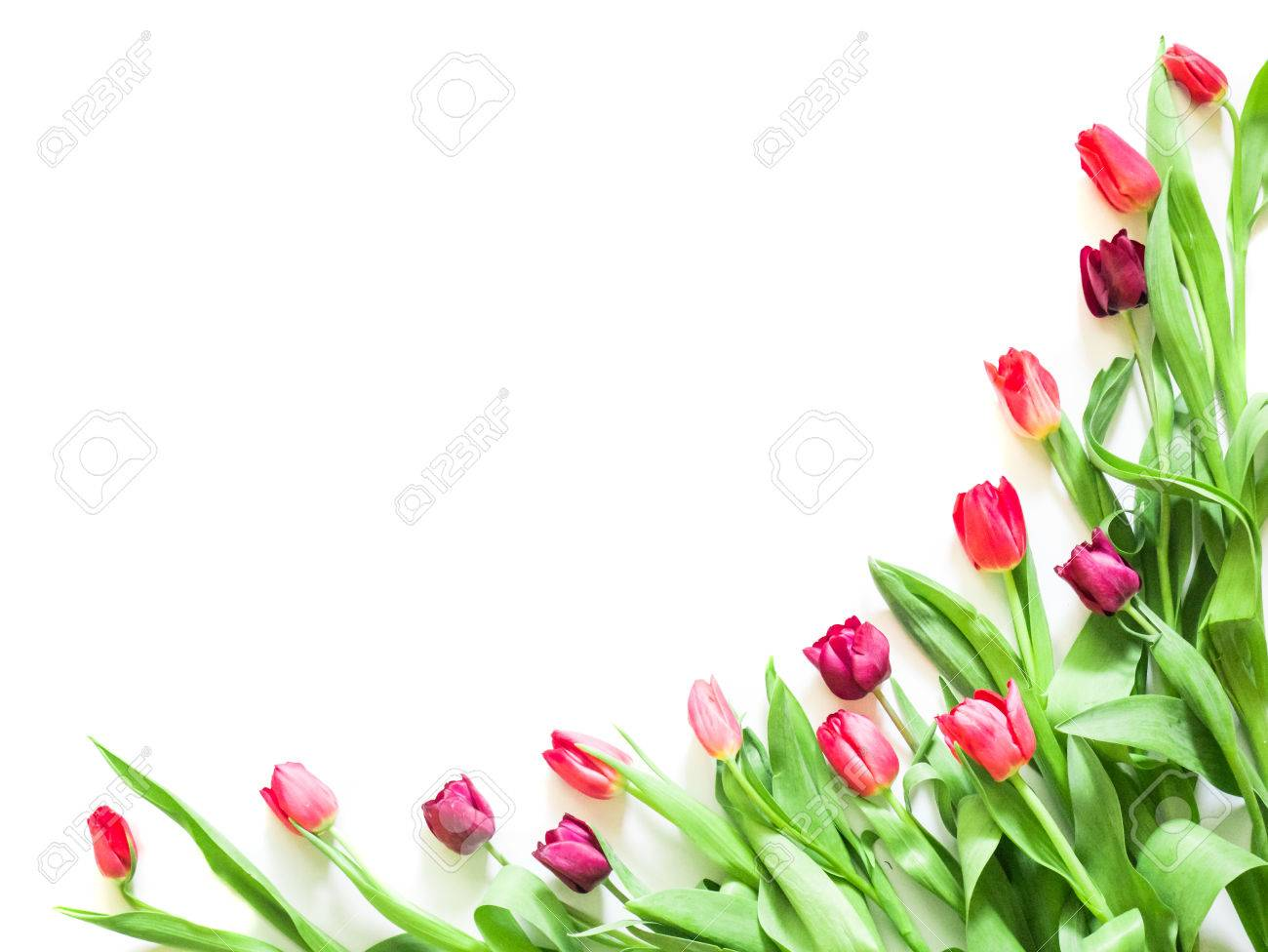 Present Card With Tulip Flowers Corners Template Stock Photo ...