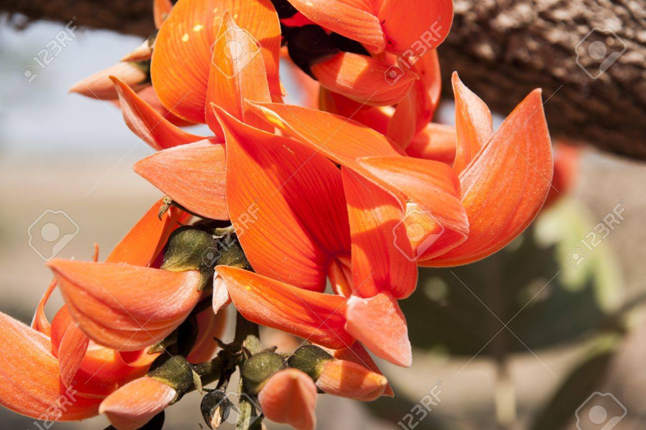 Splendid colour of the flame of forest flowers Stock Photo - 18726119