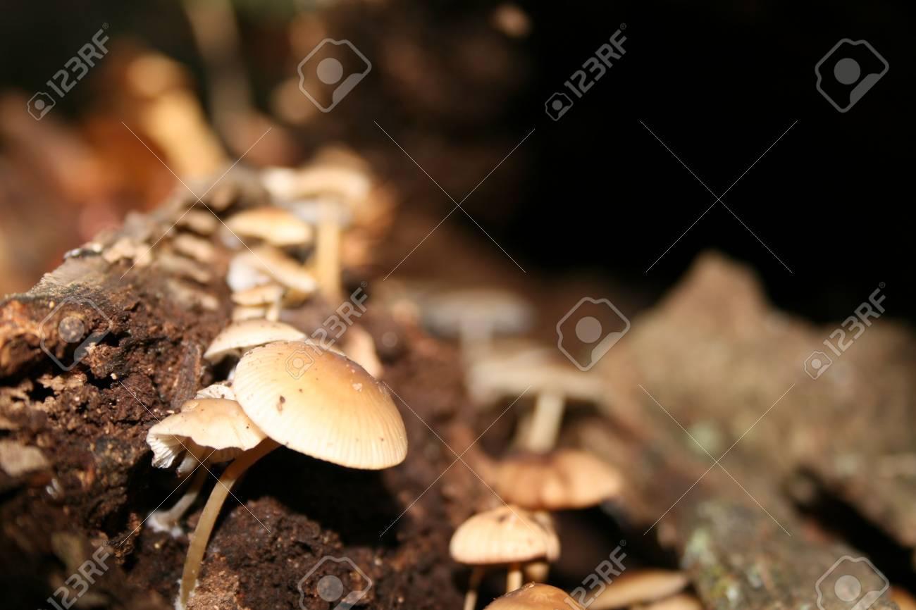 Mushroom in and old log with shallow DOF Stock Photo - 2523697