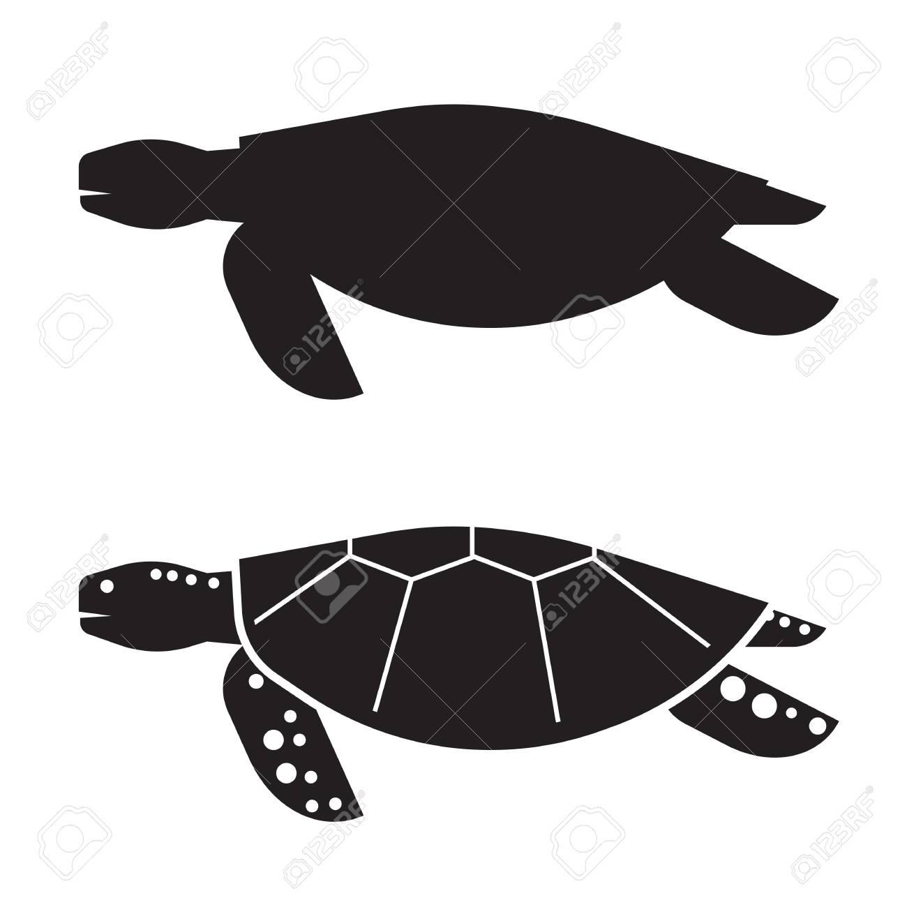 Großartig Anatomie Einer Meeresschildkröte Zeitgenössisch ...