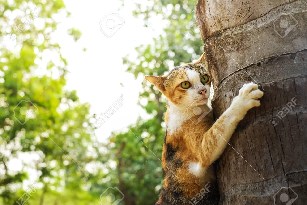 Una Imagen De Un Gato Trepando A Un árbol. El Gato Marrón Sube En Un ...