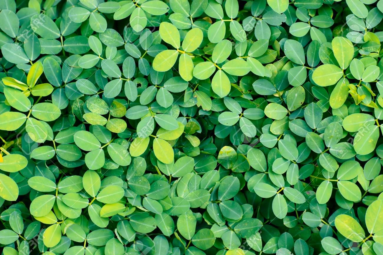 Cover Of Fresh Bright Green Plants For Wallpaper Organic Vibes Stock Photo Picture And Royalty Free Image Image 121883447