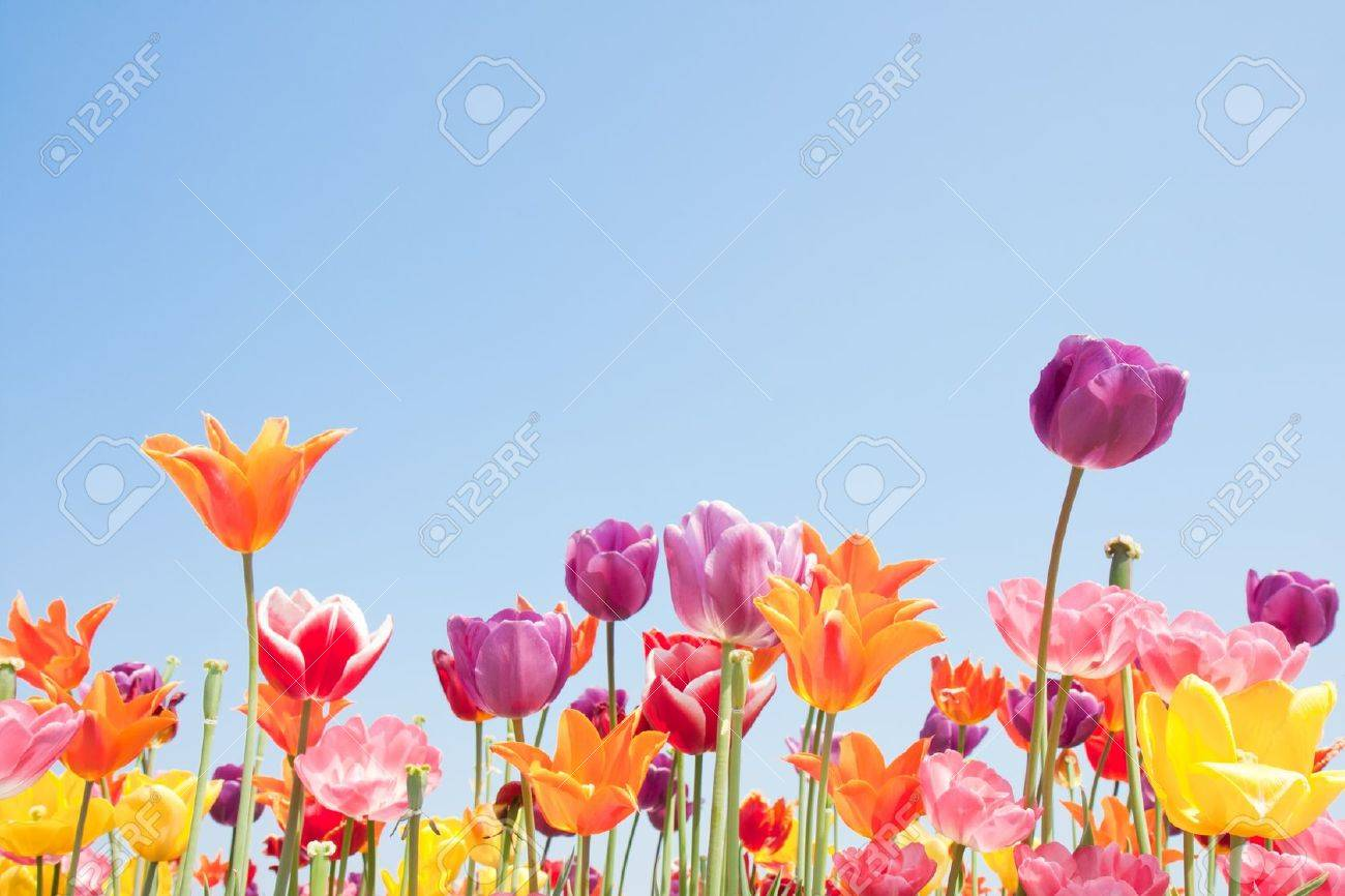 Beautiful coloured flowers with copyspace for text Stock Photo - 9448545