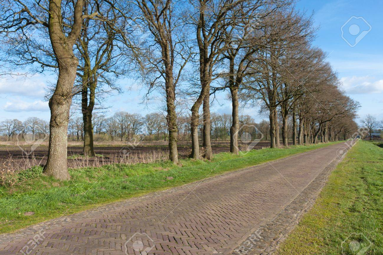 Country road in the Netherlands with bare farmland Stock Photo - 13350091