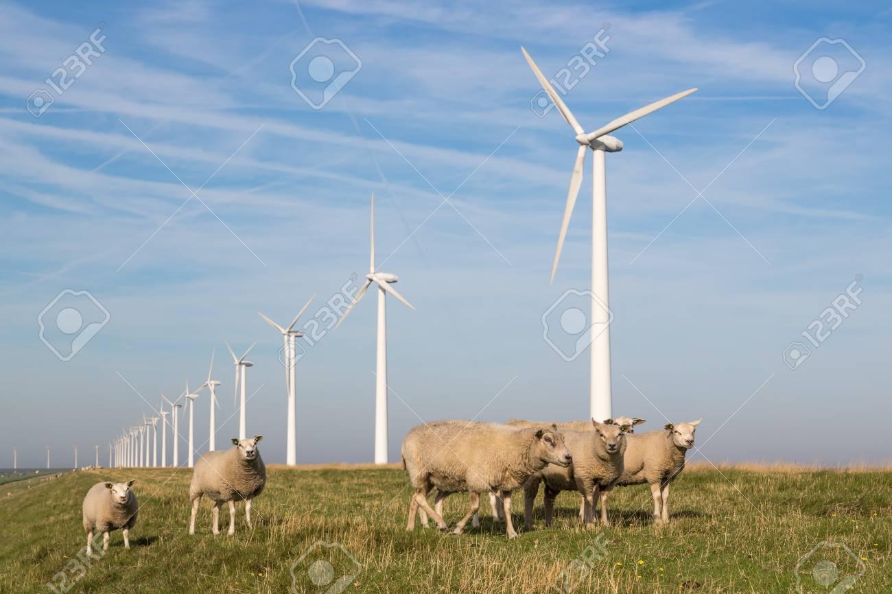 Sheep at a dike along a row of wind turbines - 21548615