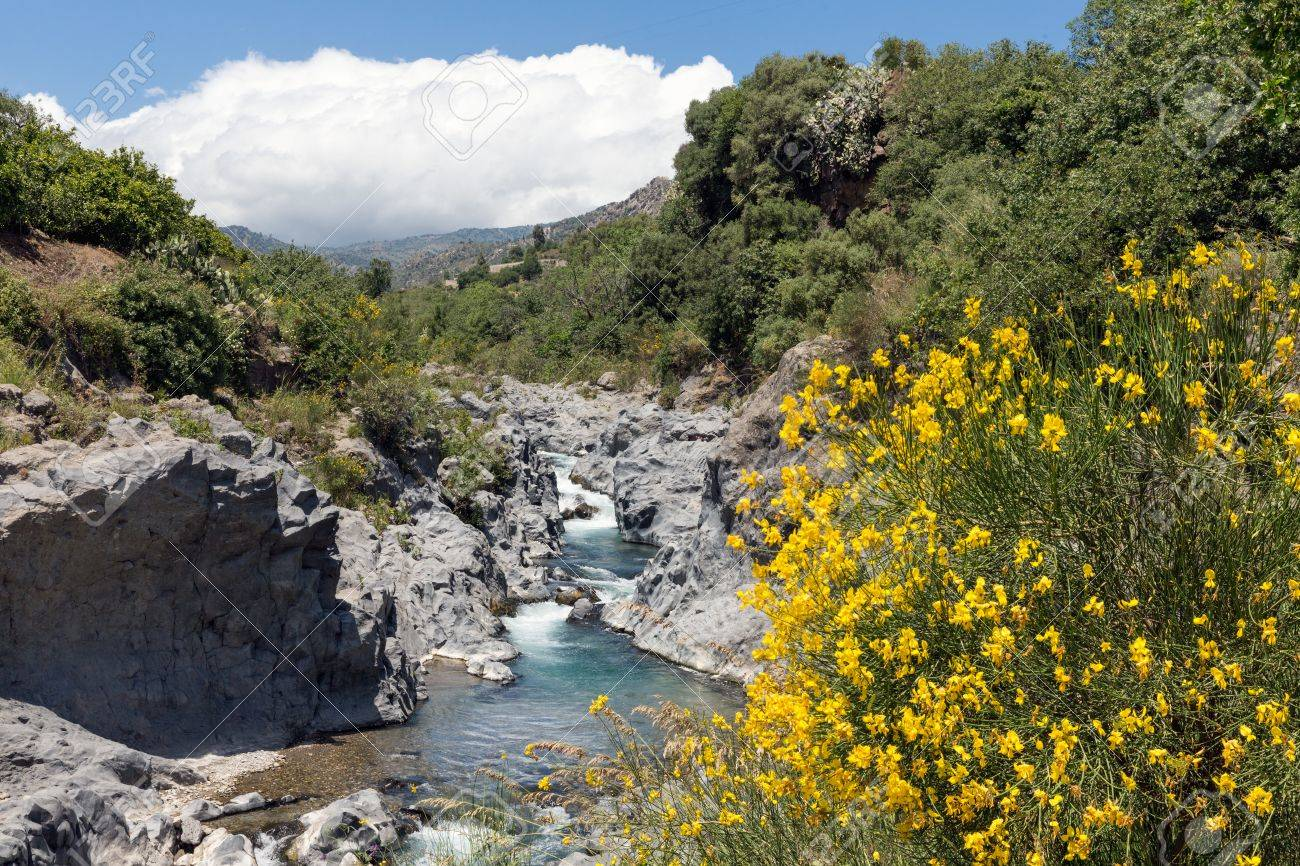 Alcantara Gorge With Blooming Yellow Broom Flowers At Sicily