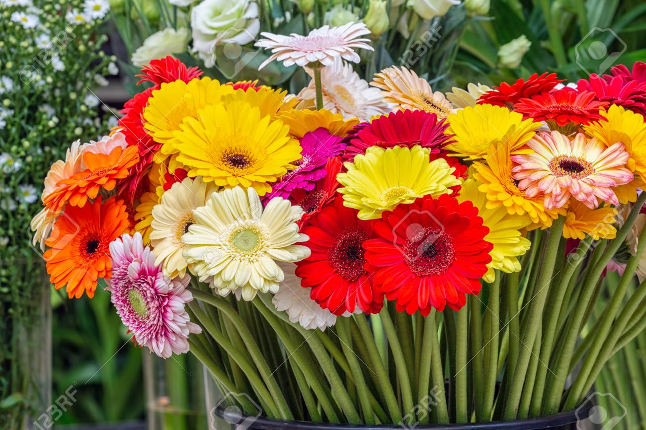 Gerbera Flowers Of Different Colors For Sale At A Dutch Florist ...
