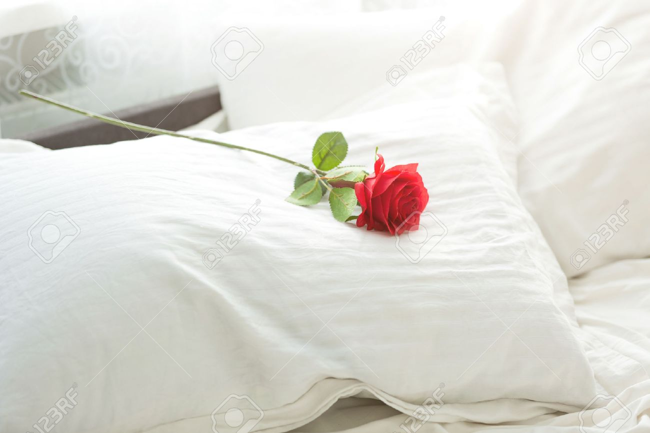 Closeup photo of red rose lying on white pillow at bed Stock Photo 2f59b9503