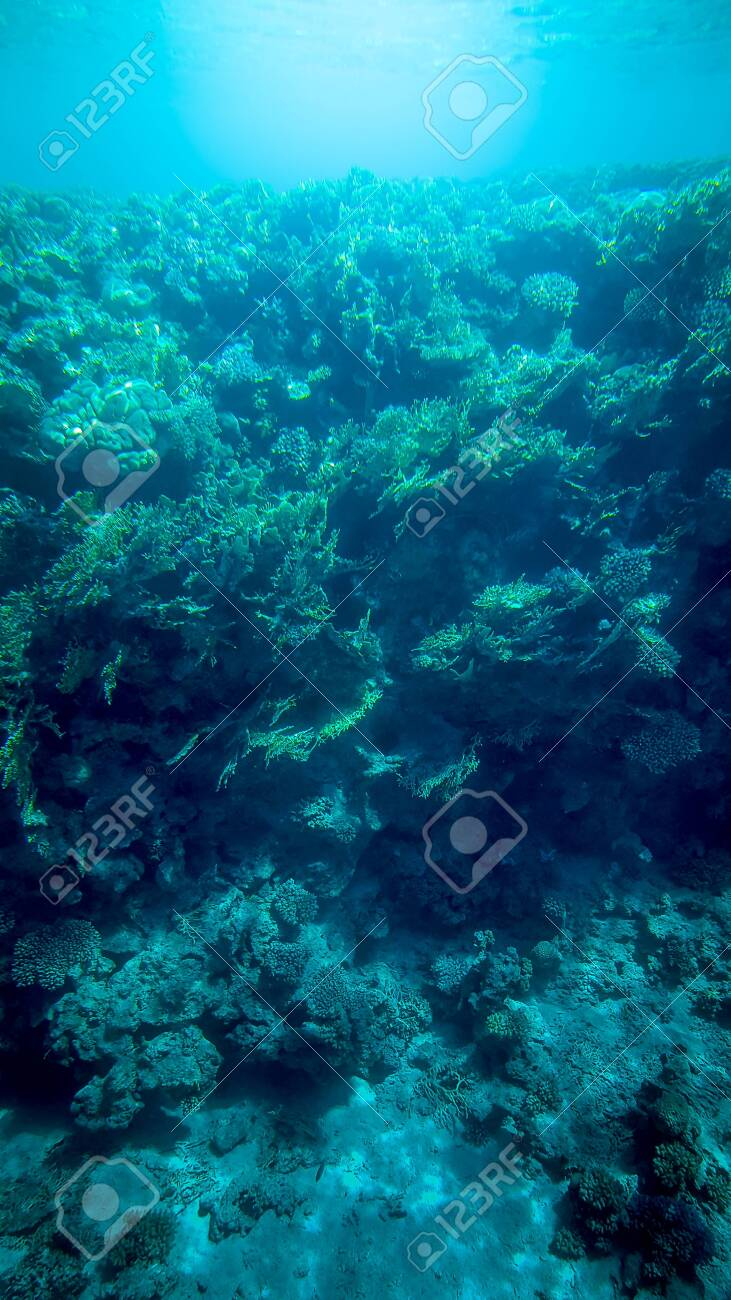 Panoramic underwater image of beautiful coral reef and swimming tropical fishes - 123552268