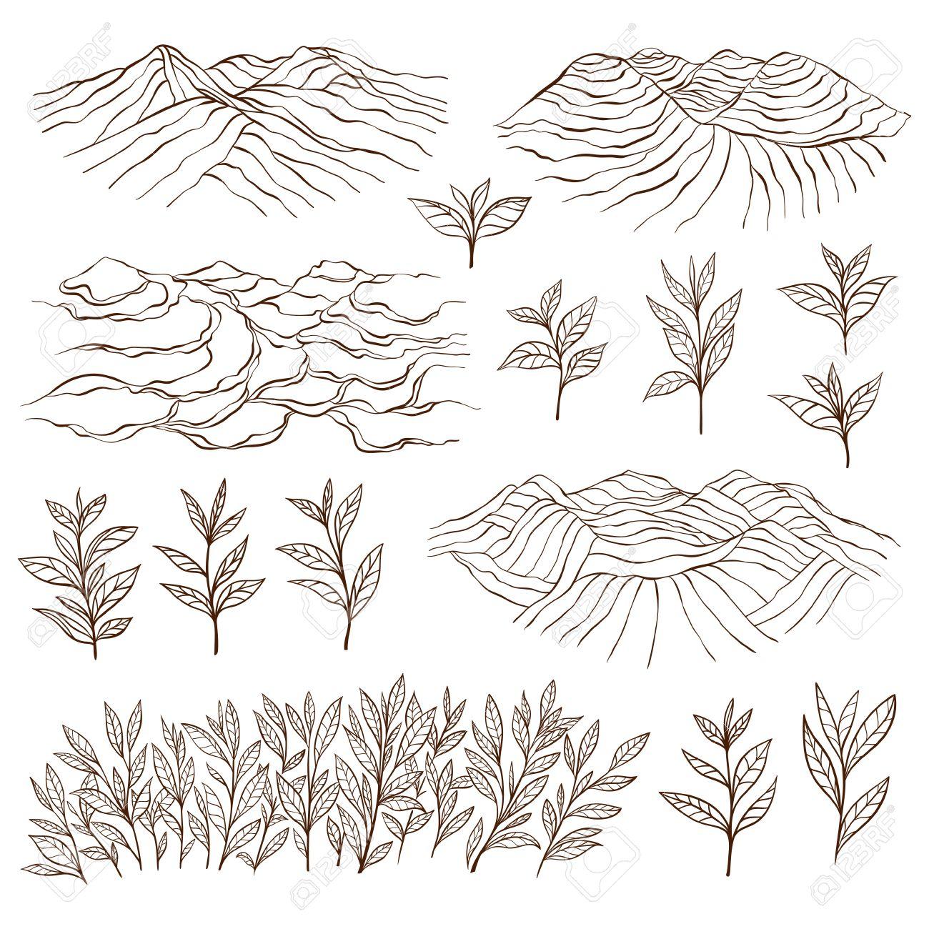 Tea plantations and plants. Tea garden on the hill. Tea bush. Tea leaves. Hand drawn vector illustration. - 57484273