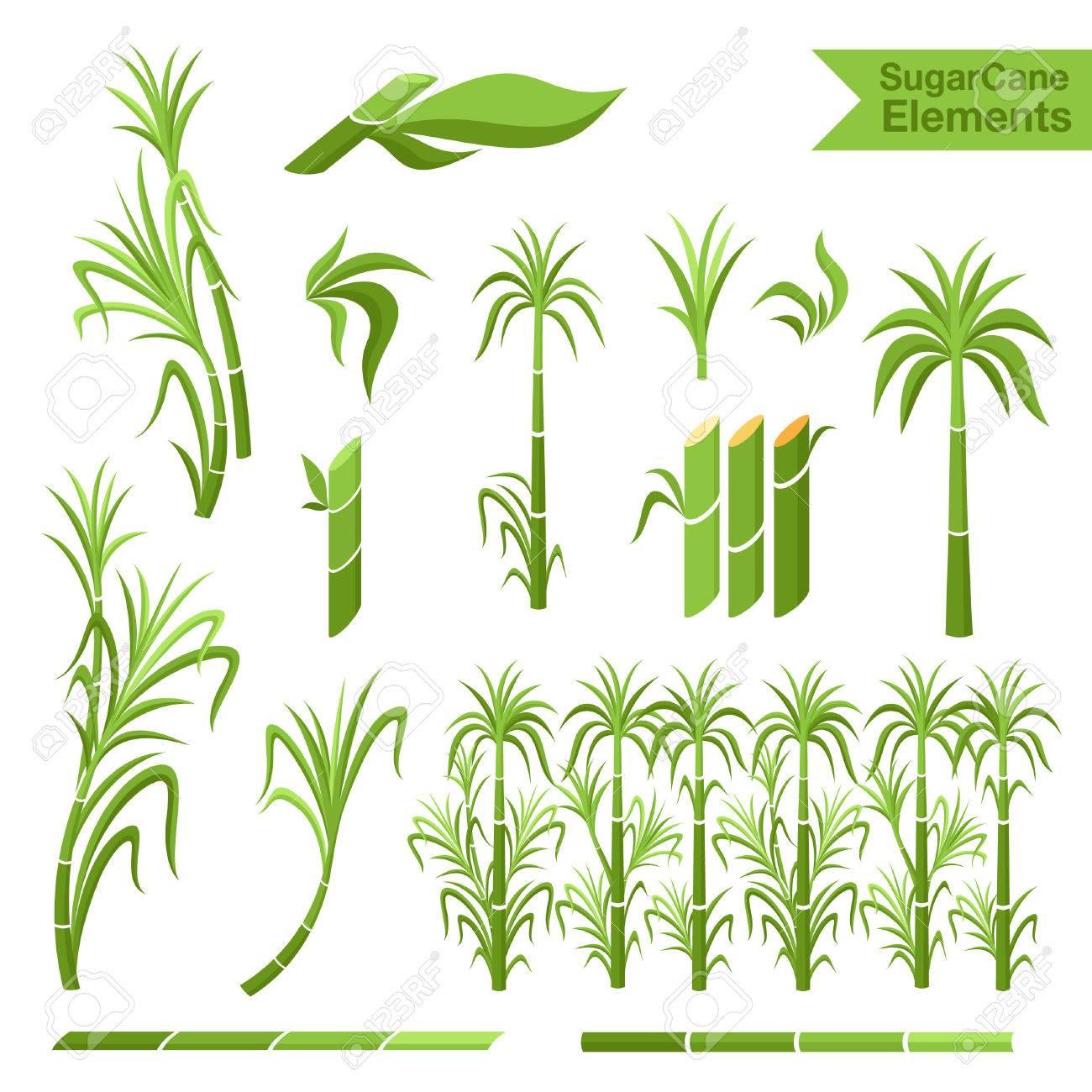Sugar cane decoration elements. Collection of elemnts for design, - 62600934
