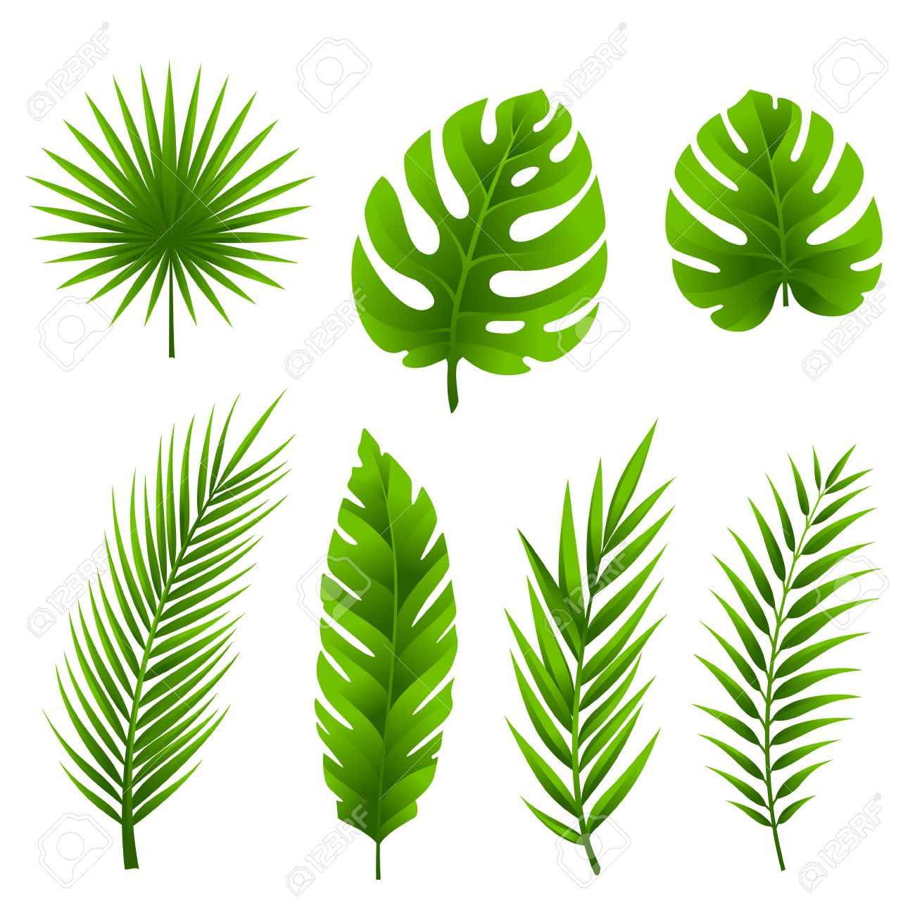 Jungle leaves set. Tropical palm tree leaves collection. - 62601104