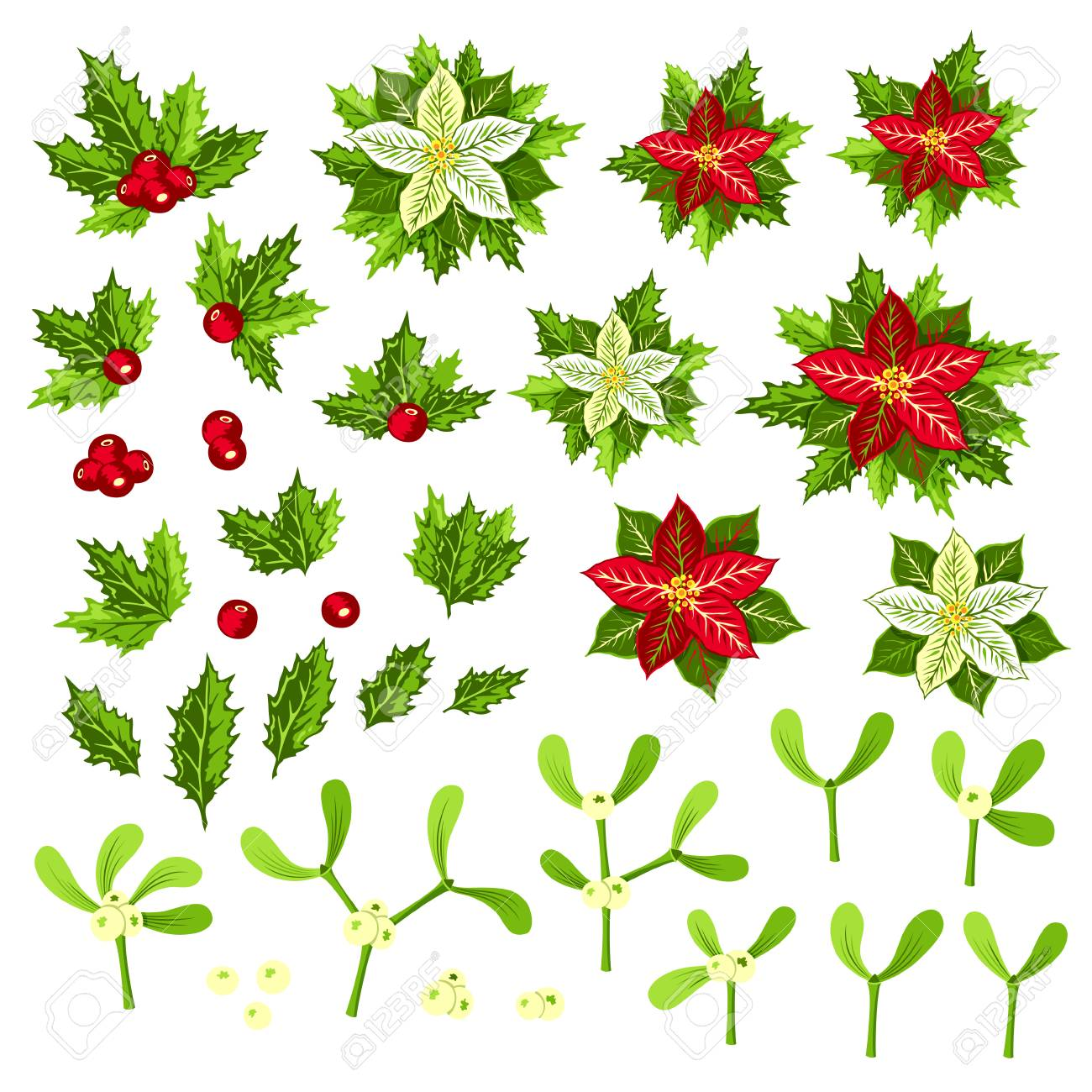Christmas Plants Poinsettia Holly And Mistletoe Collection