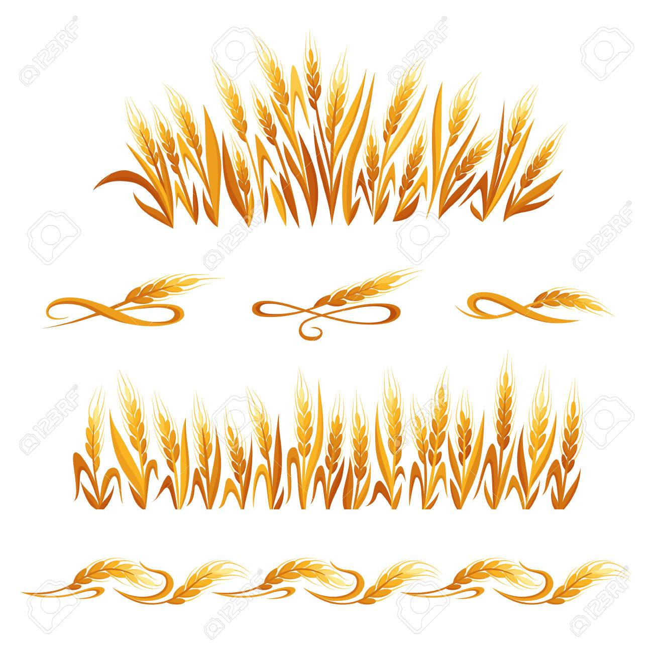 Wheat Ears Decorations Cereal Spikelets Symbols Isolated On White