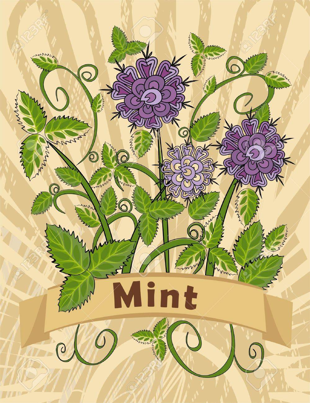 vintage card with mint plant Stock Vector - 8157094