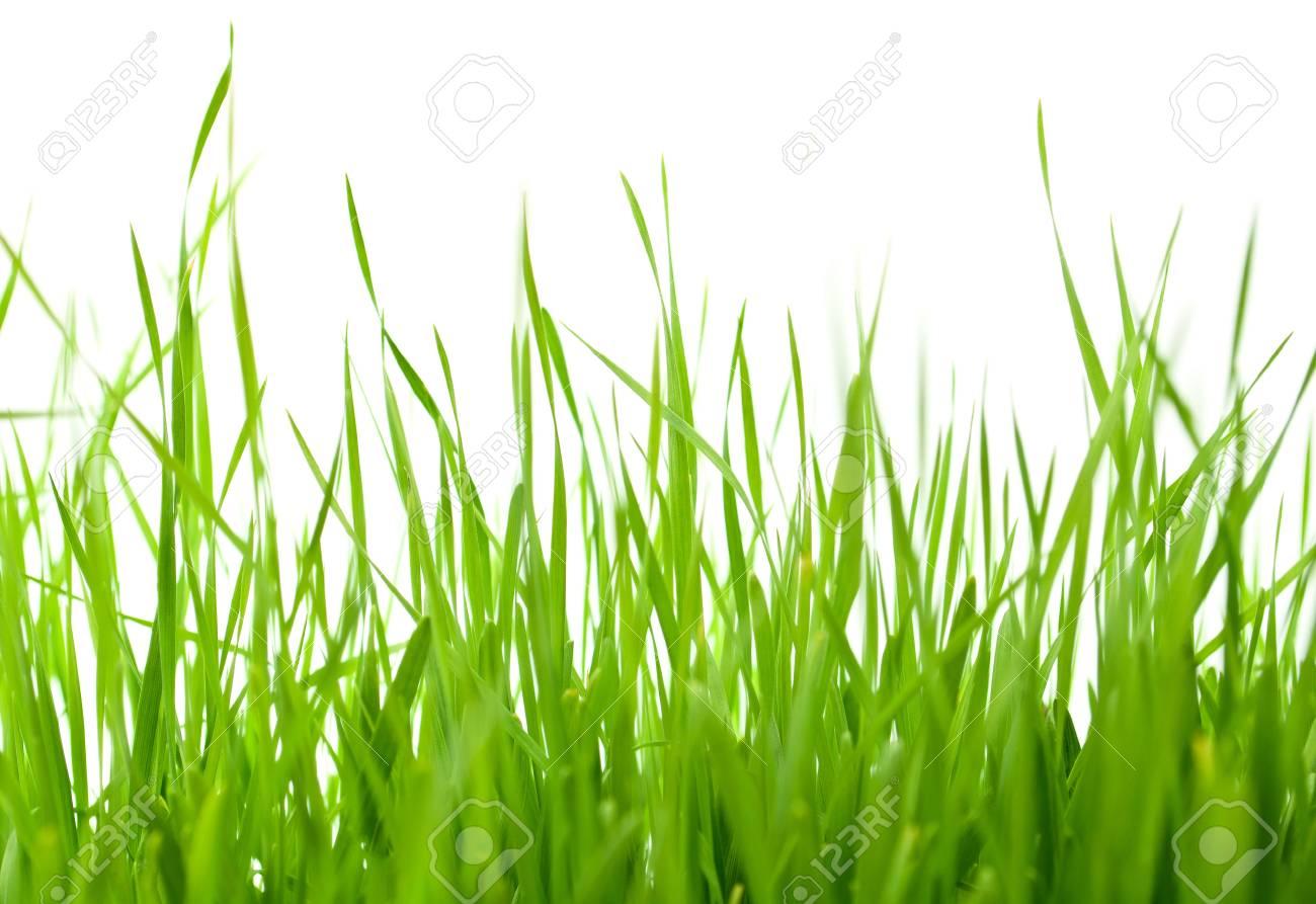 green grass on white background Stock Photo - 9166279