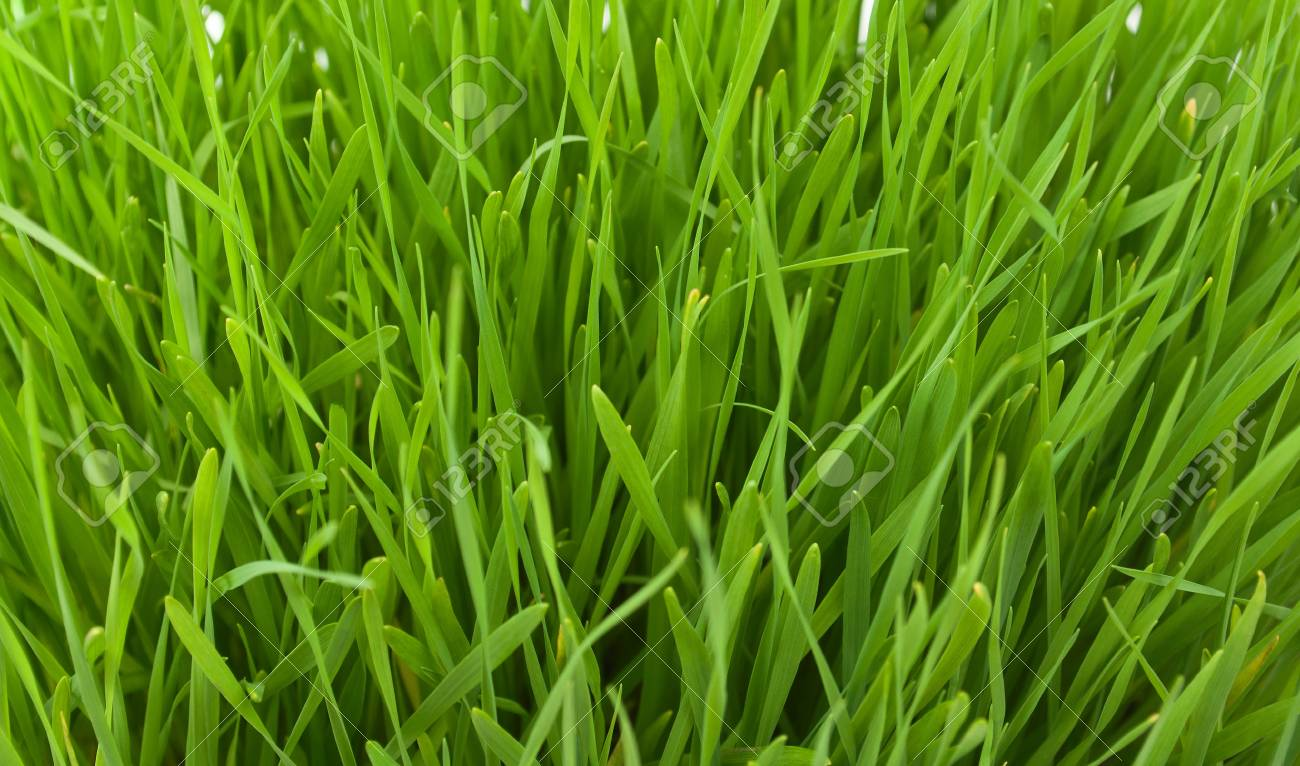 Spring grass texture, fields and meadows Stock Photo - 9166286