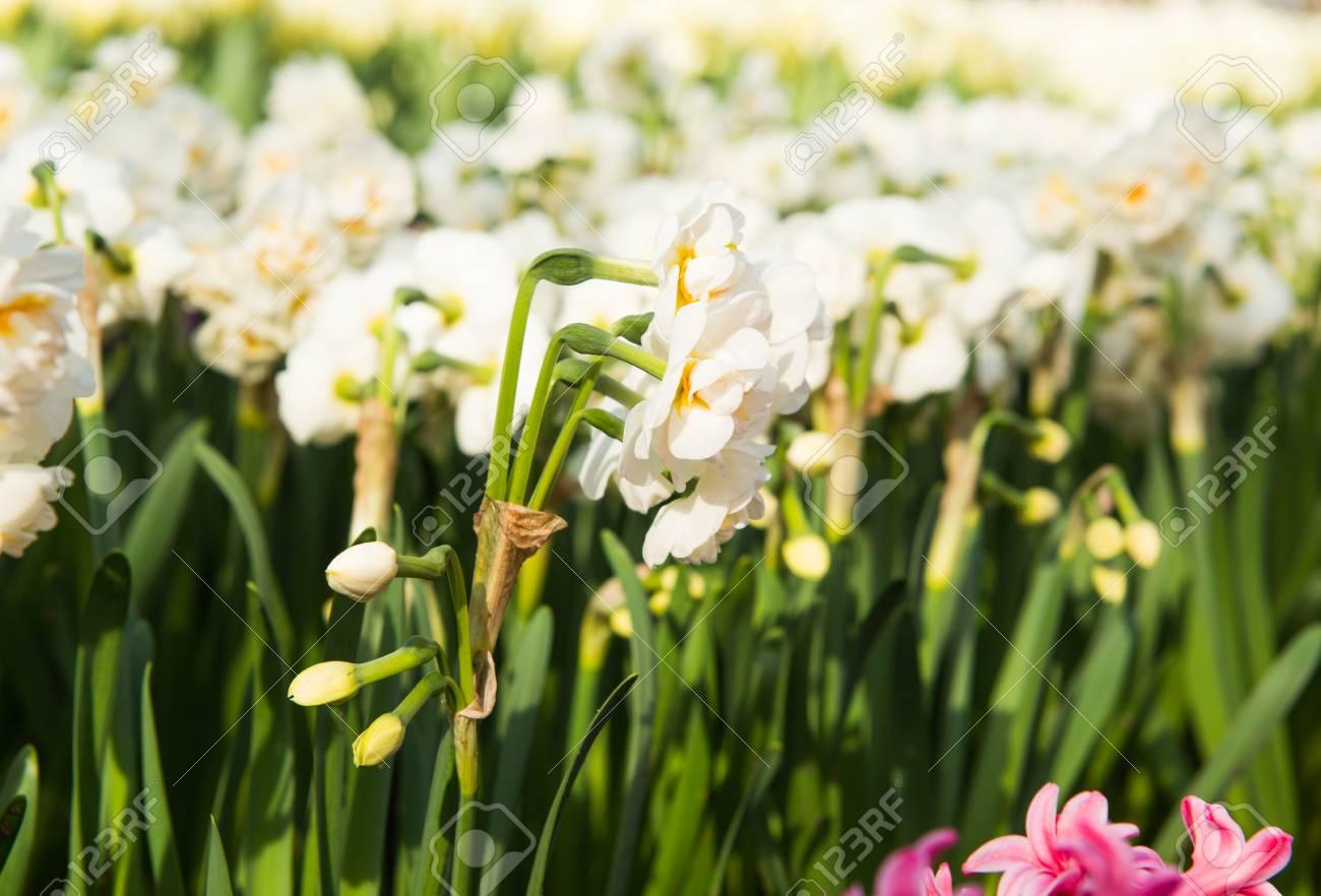 Spring Flowers In The Park In Early Spring Lizenzfreie Fotos Bilder
