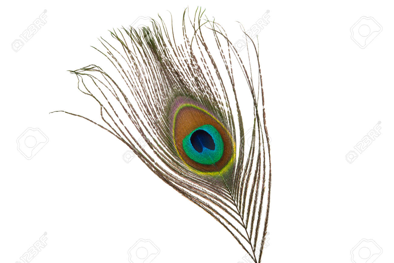 peacock feather with eye isolated on white background - 149417838