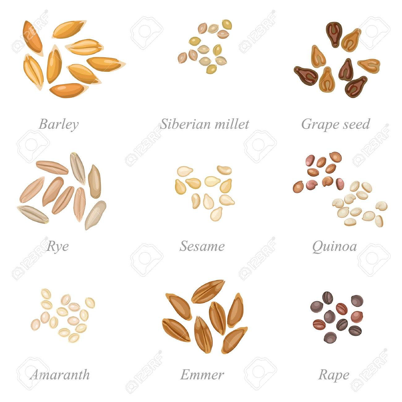 Icons set of cereal grains and oilseeds - 55816879