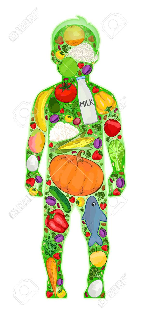 Healthy baby food in the body, vector illustration Stock Vector - 68077695