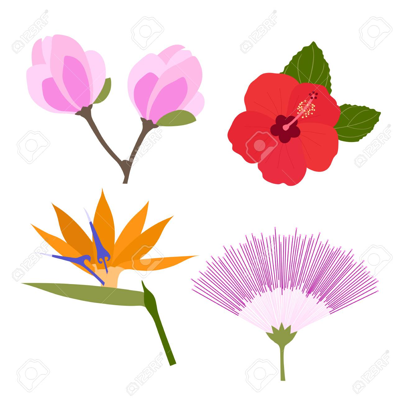 Set Of Tropical Flowers Isolated On White Background Silk Tree