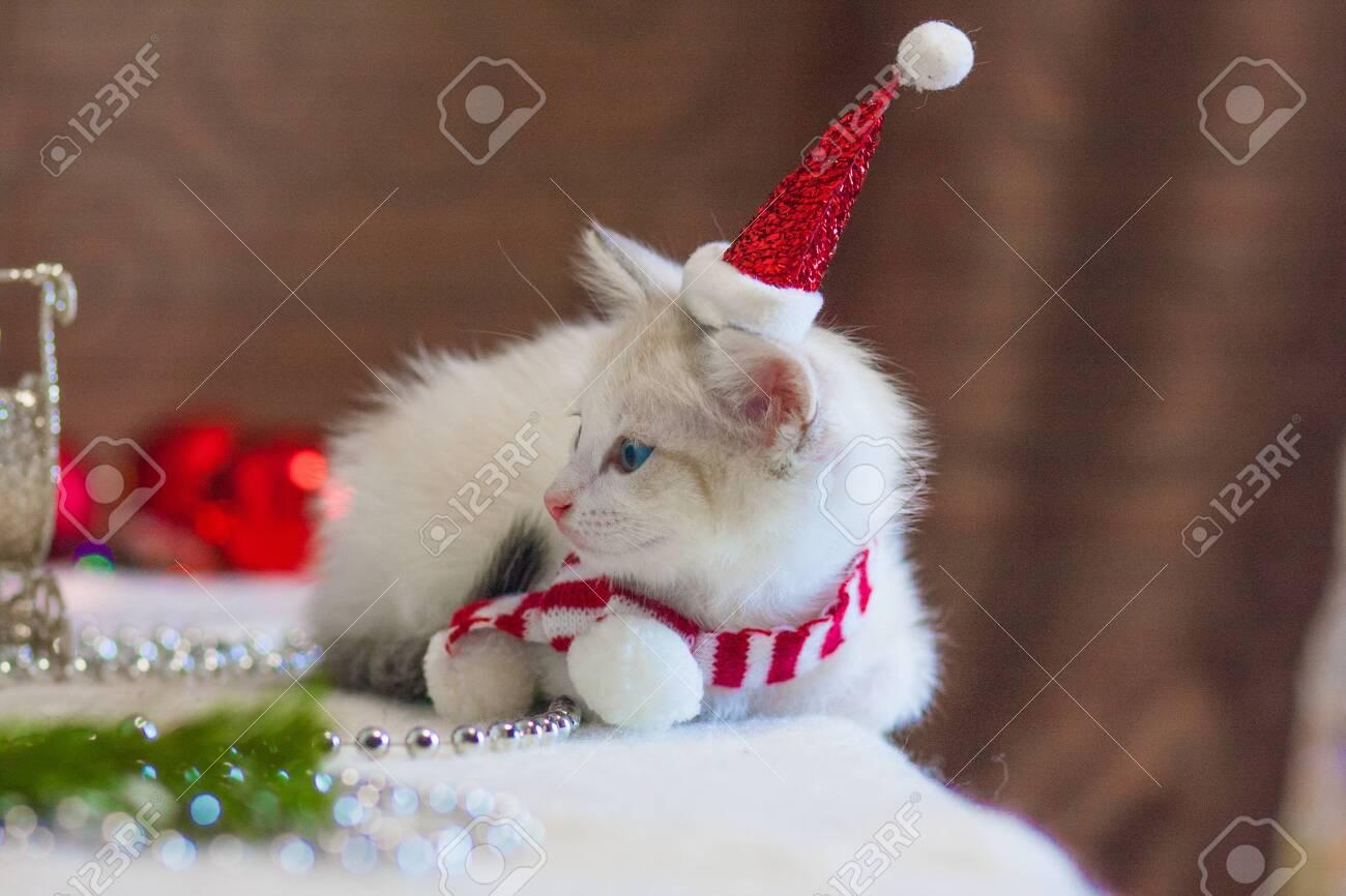 Kitten Christmas.Cat In A Christmas Cap Kitten In A Santa Suit Christmas Animals