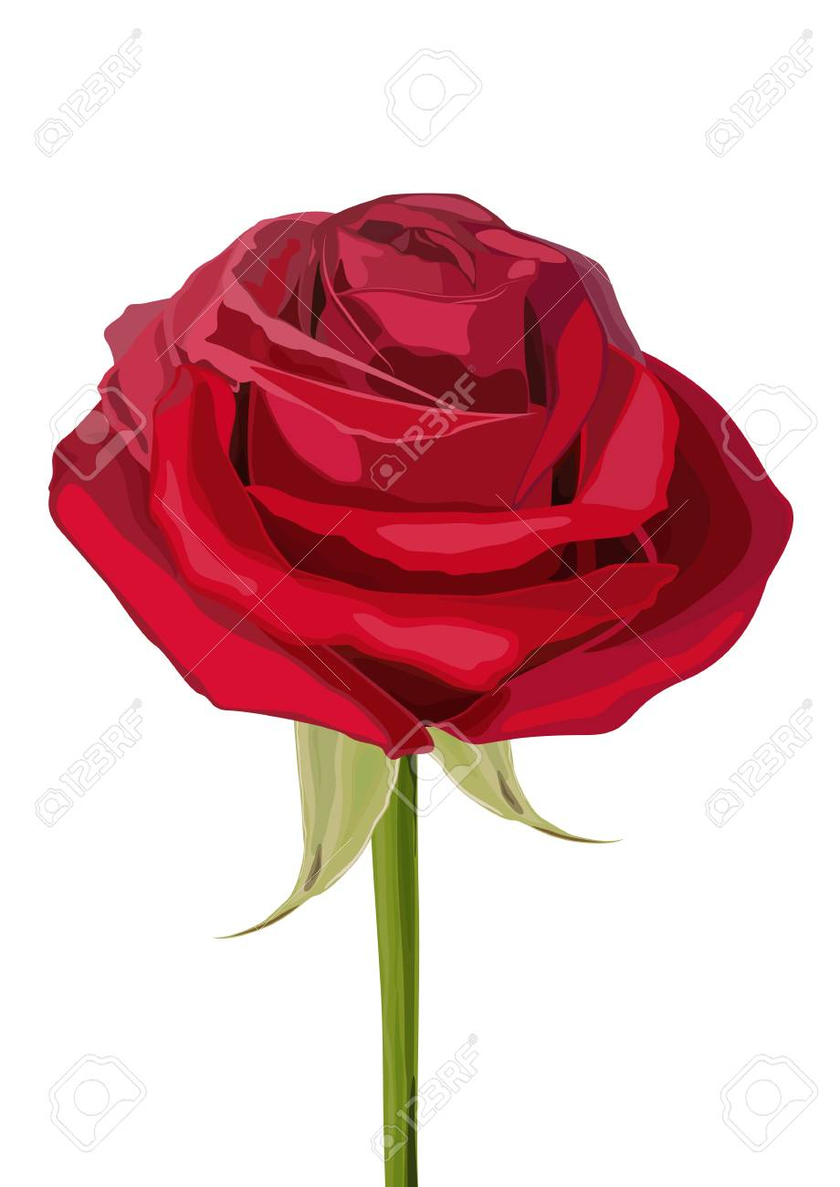 Blooming Red Flower Rose Love Romance And Valentine Greeting